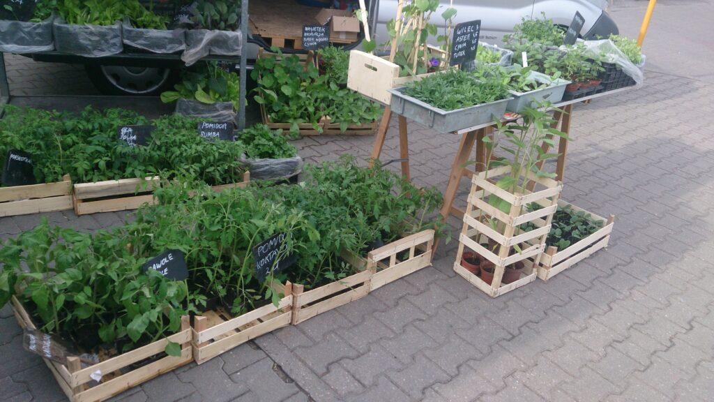 Gdzie i jak kupować warzywa?