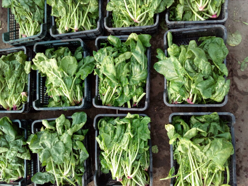 Zielone warzywa lubią mieć dostęp do świeżego powietrza