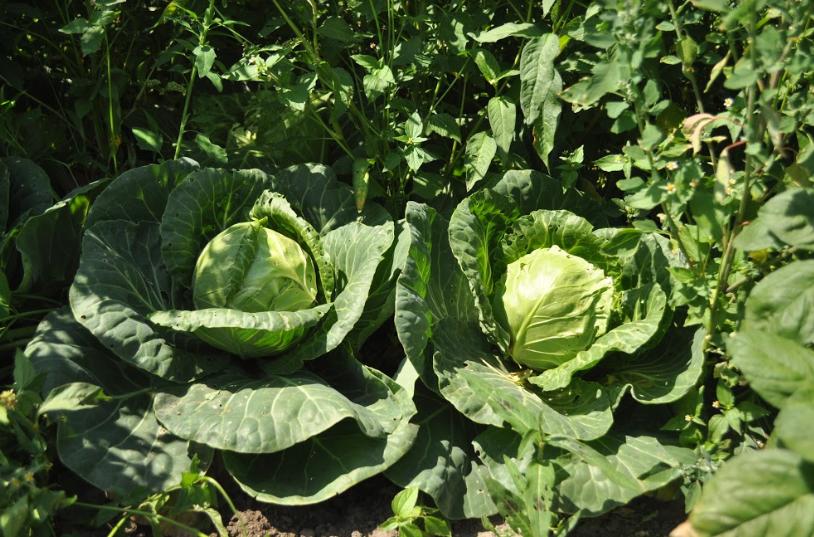 mrożone warzywa Poznań